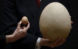 """Đấu giá quả trứng """"khủng"""" nhất thế giới"""