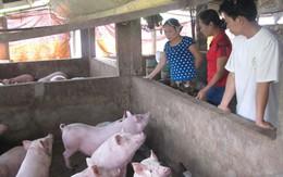 Dân kêu trời vì lợn giống, lợn hơi ế thảm