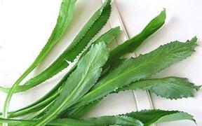 5 bài thuốc chữa bệnh của rau mùi tàu