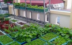 Theo hướng dẫn này, hóa ra việc trồng rau trong thùng xốp lại cực đơn giản