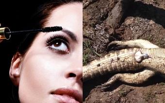 Những cách làm đẹp kỳ dị (11): Hoang đường phân cá sấu là mỹ phẩm hồi xuân xa xỉ, tưởng đùa mà hóa thật
