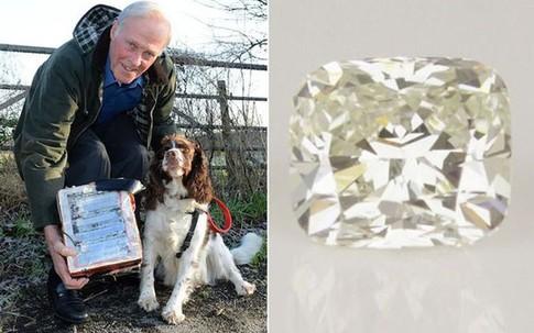 Chó đào được viên kim cương gần nửa tỷ