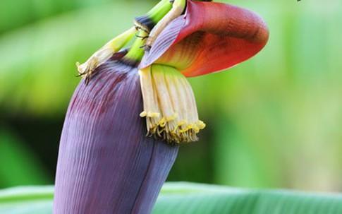 Lợi ích sức khỏe bất ngờ từ hoa chuối