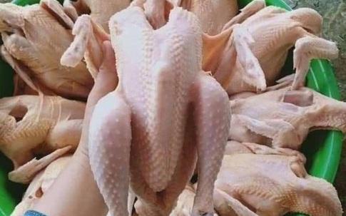 Gà ri giá siêu rẻ bán đầy chợ mạng không phải là gà thải loại hay gà công nghiệp