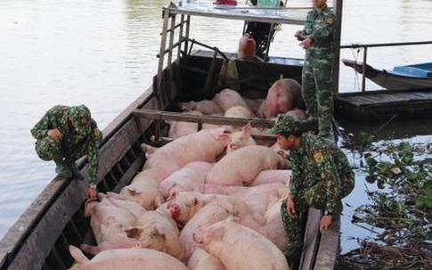 """Dịch tả lợn châu Phi tái phát ở Quảng Ninh, Bộ NN&PTNT ra công văn """"khẩn"""""""