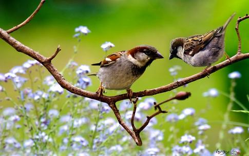 Thâm cung bí sử (216 - 4): Mùa chim làm tổ