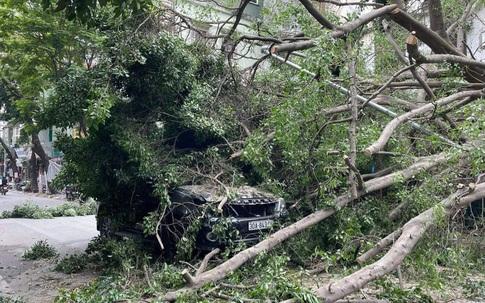 Hà Nội: Đang chạy trên đường, ô tô bất ngờ bị cây cổ thụ đè trúng
