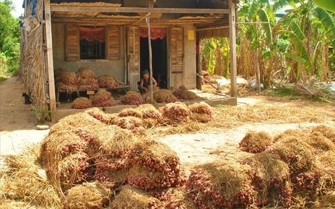 Giá hành khô rơi thẳng đứng từ 60.000 đồng/kg xuống còn 2.000 đồng/kg
