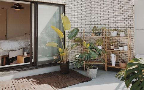 Căn hộ 33m² có ban công ngập nắng của nữ kiến trúc sư ở Thủ đô