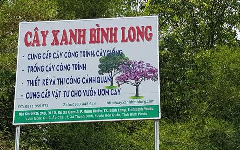 Điểm mua cây xanh công trình uy tín mùa dịch COVID– Cây xanh Bình Long