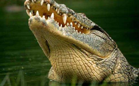 Ông bố dũng cảm cạy miệng cá sấu để cứu con trai