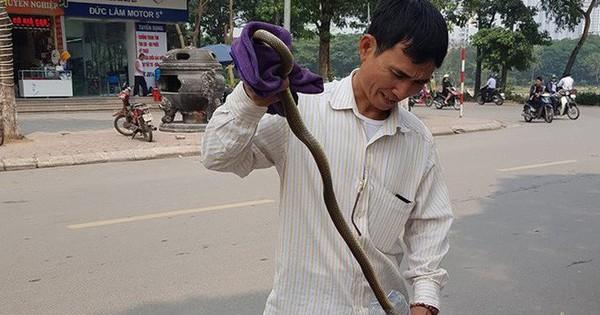 """Cư dân Linh Đàm, Hà Nội hoang mang vì 2 lần thấy rắn dài cả mét """"từ trên trời rơi xuống"""""""