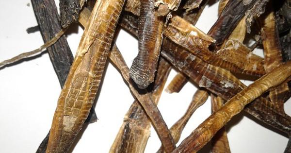Sách cổ 2000 tuổi ghi cách khắc chế đột quỵ từ giun đất