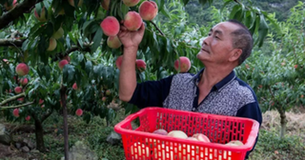 Cụ ông 70 tuổi mắc ung thư gan vẫn sống khỏe nhờ một bát súp và chú ý 2 việc