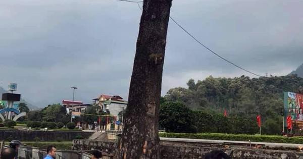 Nam thanh niên thiệt mạng vì bị cành cây rơi trúng đầu khi đang đi bộ
