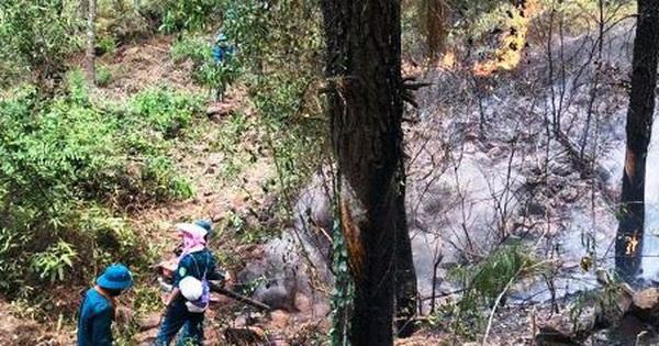 Nghệ An: Triệu tập một phụ nữ liên quan đến vụ cháy rừng hơn 1000 người phải đến dập lửa