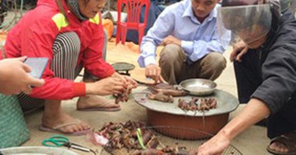 """Nơi người dân """"mê"""" thịt chuột hơn thịt gà ở Hà Nội"""