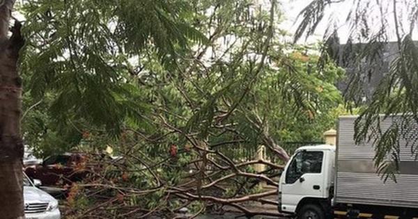 TP.HCM: Thêm một cây phượng bật gốc đè xe tải sau cơn mưa lớn khiến nhiều người hú vía