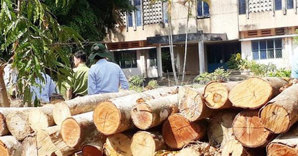 Nguyên giám đốc khu bảo tồn phá rừng ở Đồng Nai bị kỷ luật