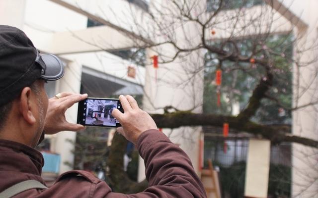 Chiêm ngưỡng cây đào đá Sapa giá hơn 600 triệu đồng tại Hà Nội