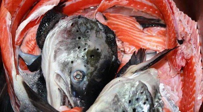 Lạ Hà Nội: Mỗi ngày bán 300 bộ xương cá hồi