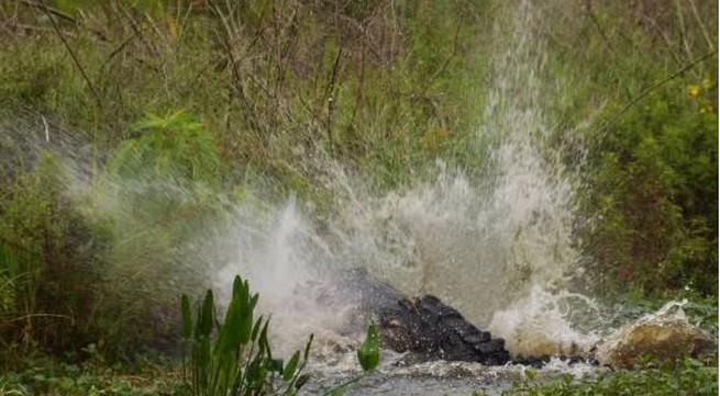 Cái chết thương tâm của người phụ nữ nhảy xuống hồ cá sấu tự tử