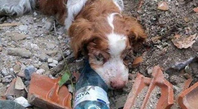 Tội nghiệp chú chó bị chủ chôn sống!