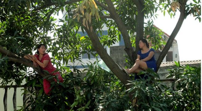 """Hà Nội: Hai phụ nữ """"cố thủ"""" trên cây để phản đối chặt cây"""