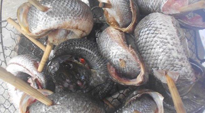 Thơm ngon cá lóc nướng kho gừng