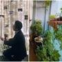 Nữ MC được bạn trai doanh nhân quỳ gối cầu hôn, biến ban công vài m2 thành vườn xanh ngát